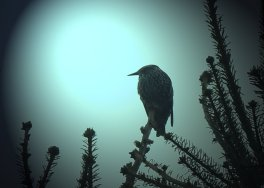 Starling on Watch