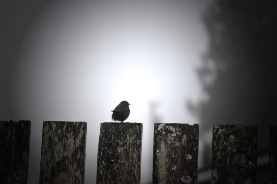 Solitary Morning