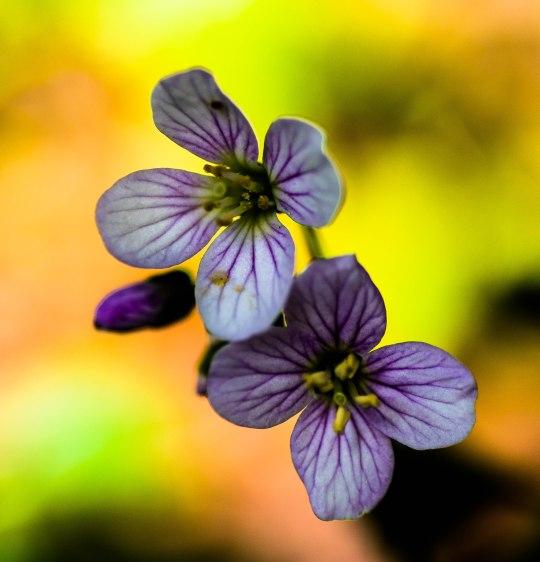 Spring wildflowers