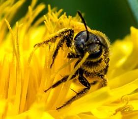 Rolling in Pollen