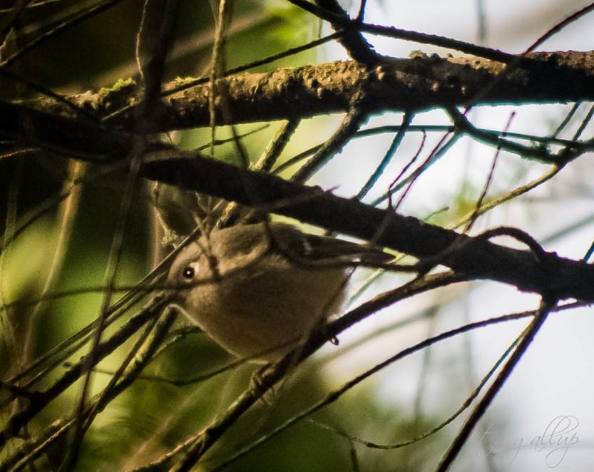 birdie-3857