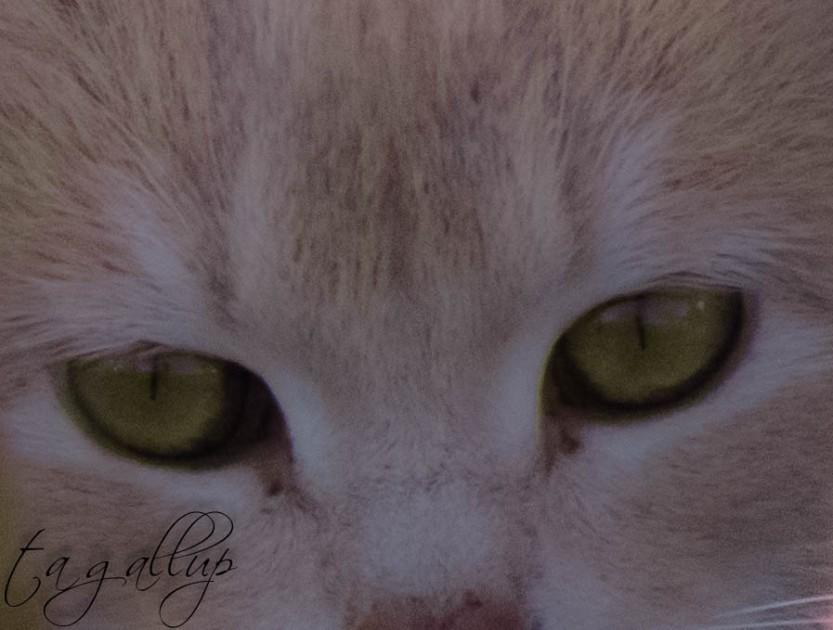 cat2-3218