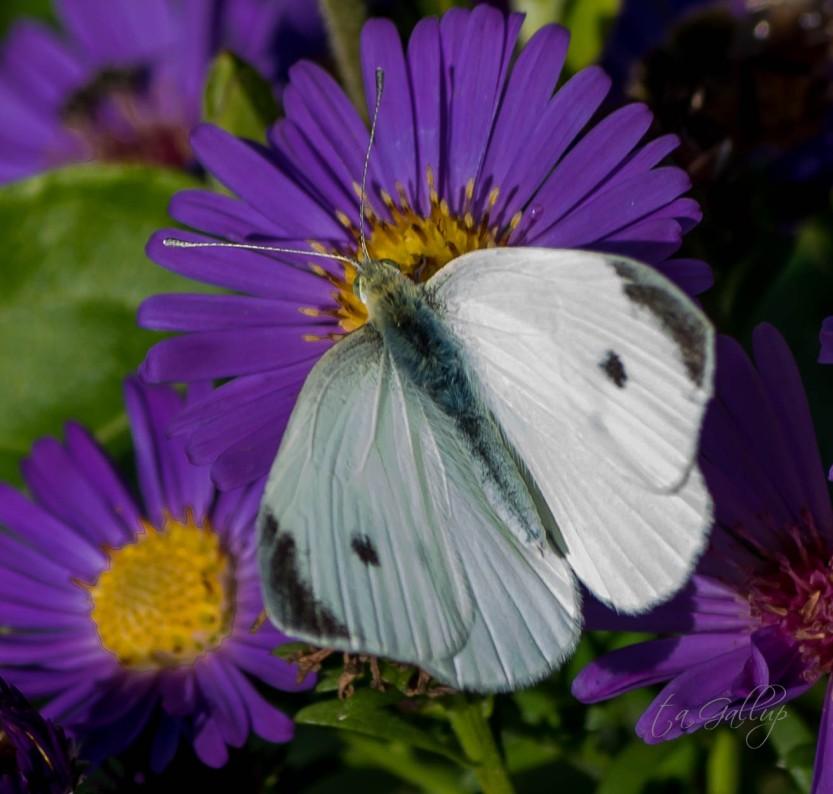 butterfly-1728