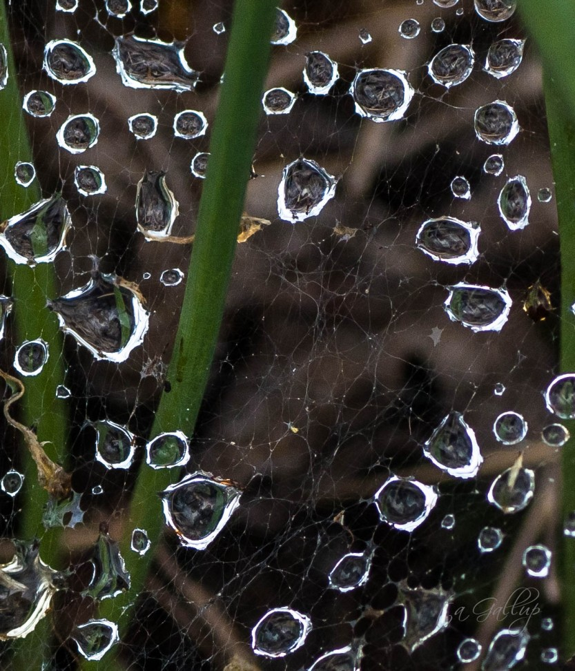 droplets_cropped-1431