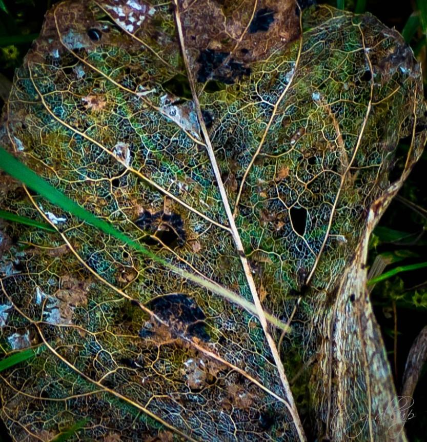 leaf-6674