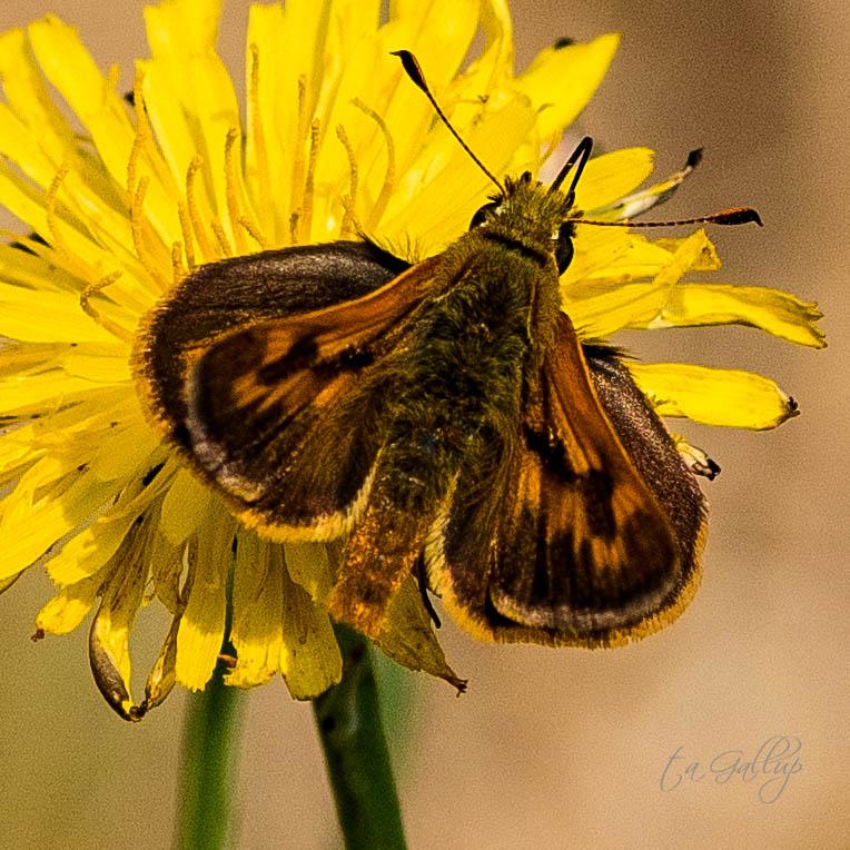 moth-9713