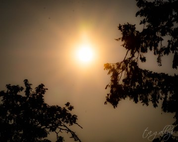 sunandpinetrees-4479