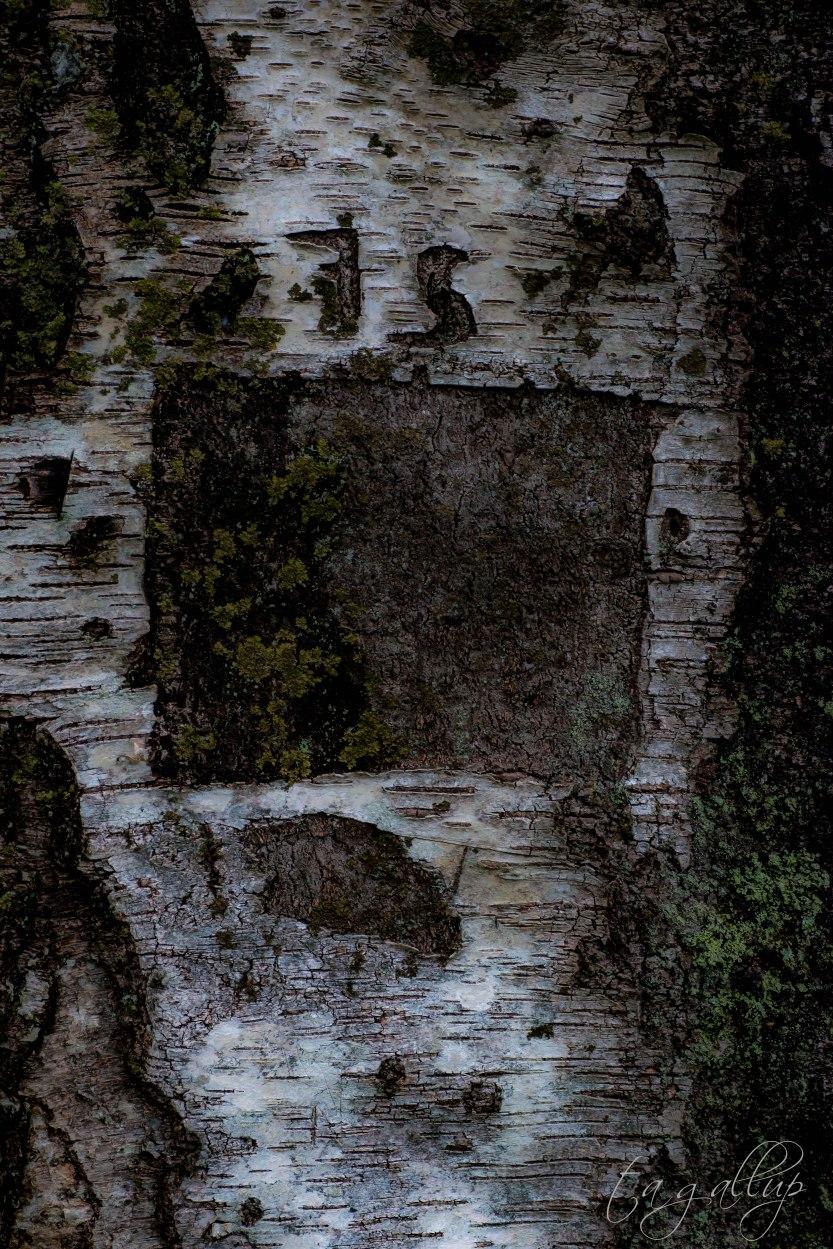 carvedtree-5503