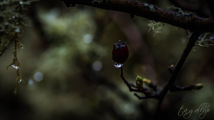 droplet-5462