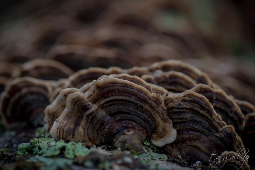 fungus2-5520.jpg