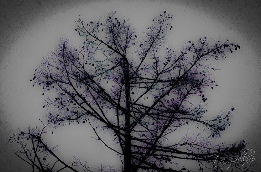 tree-5926