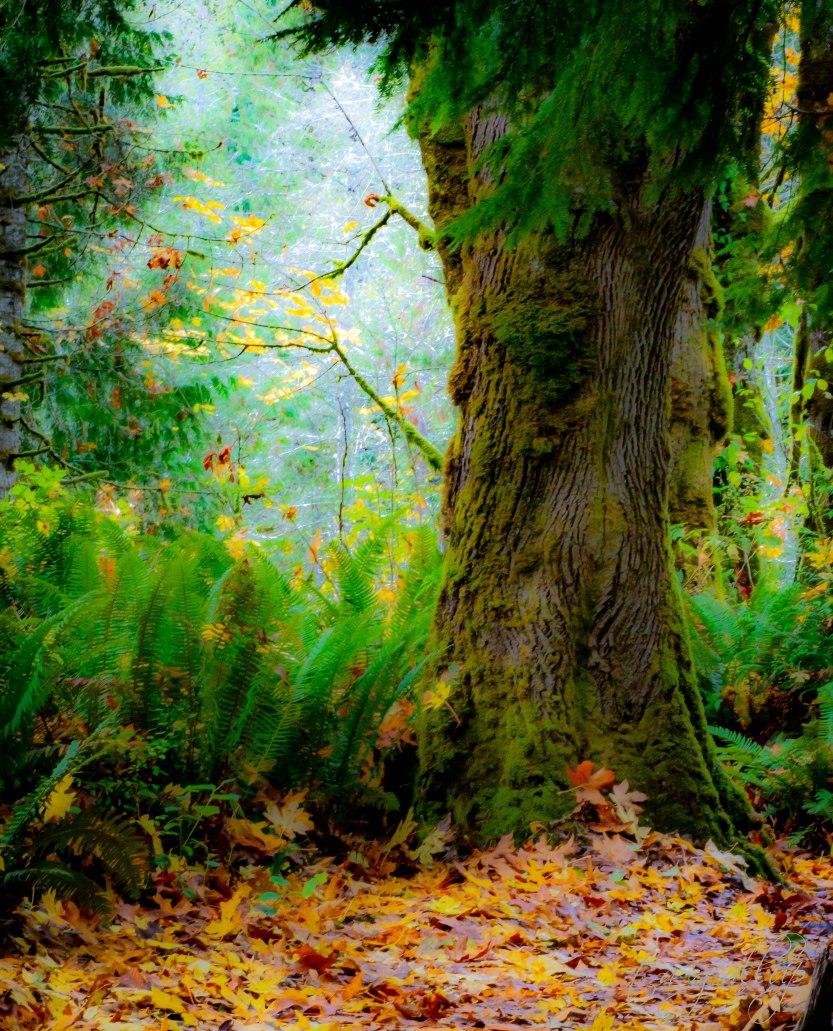 treeandsunlight-9763