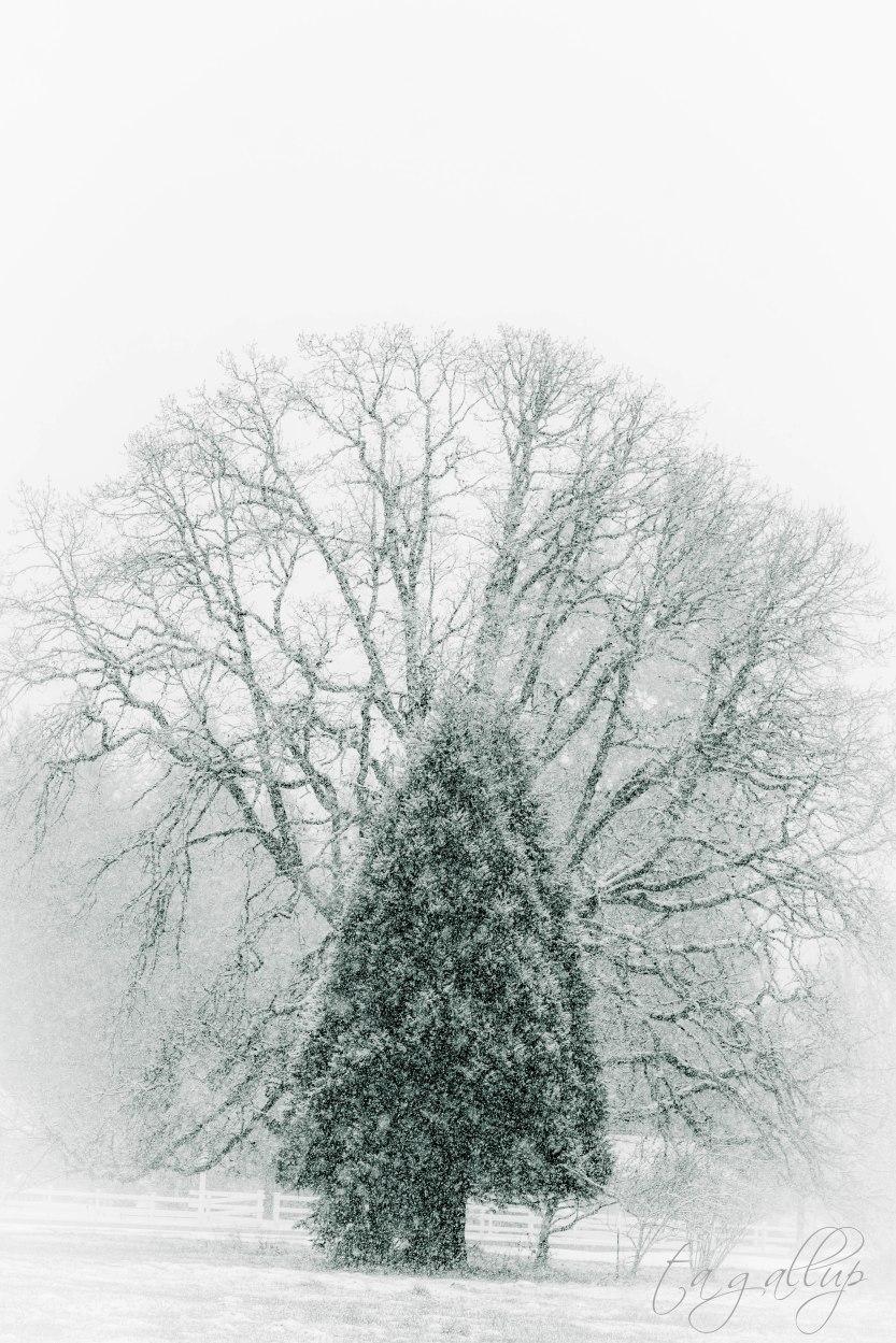 trees-5933