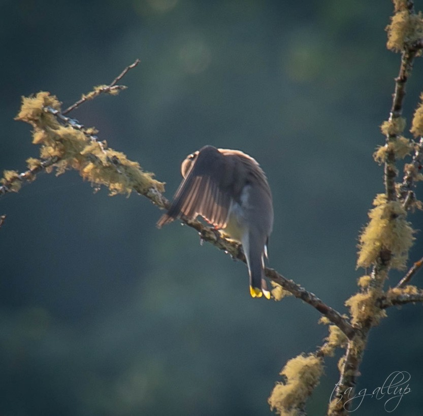 birdandwing-4446