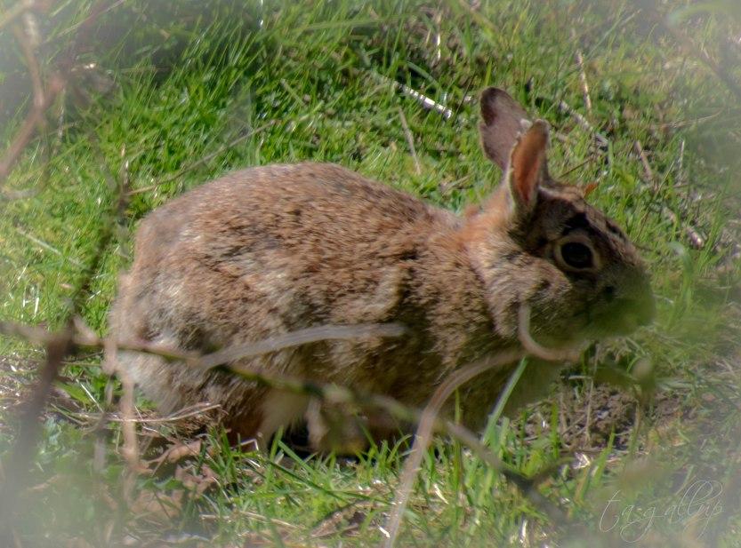 rabbit-0356