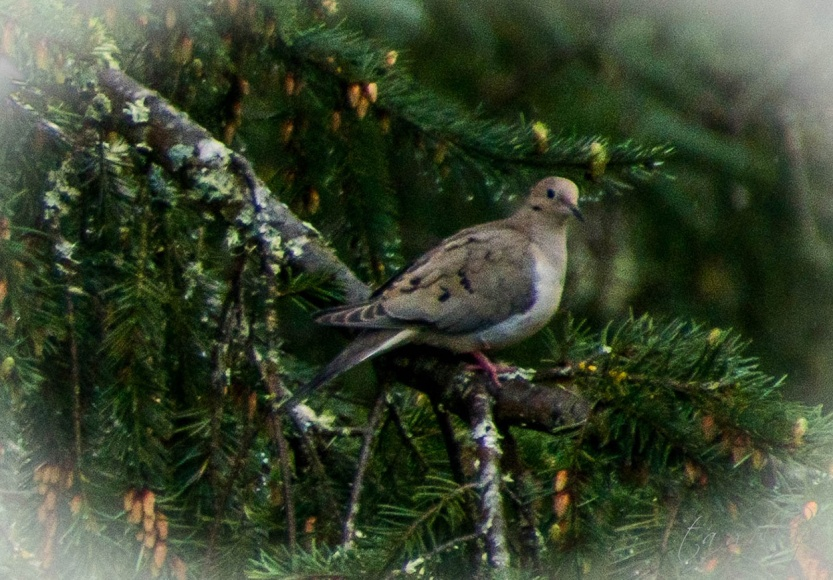 dove-9995_blog