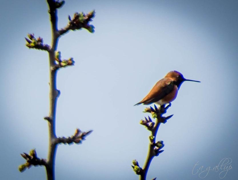 hummingbird-9943_blog
